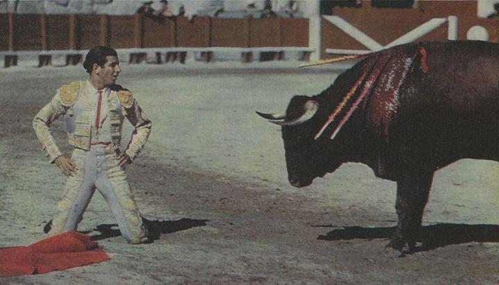 torero 6